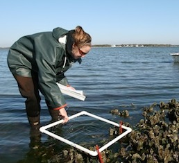 graduate student studying oyster reef