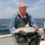 Dr. Frank Schwartz Releasing Tagged Sharpnose Shark