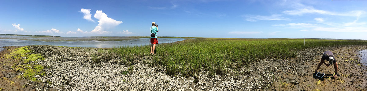 IMS-panoramic-photo-of-Middle-Marsh