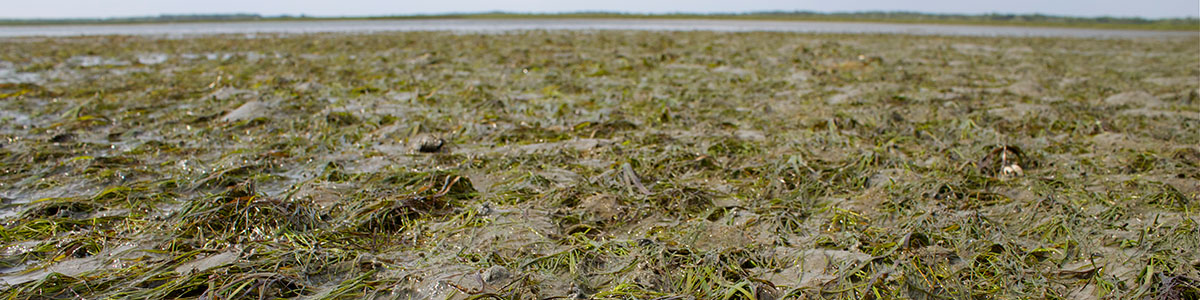 IMS-photo-of-exposed-seagrass-during-a-Spring-Tide