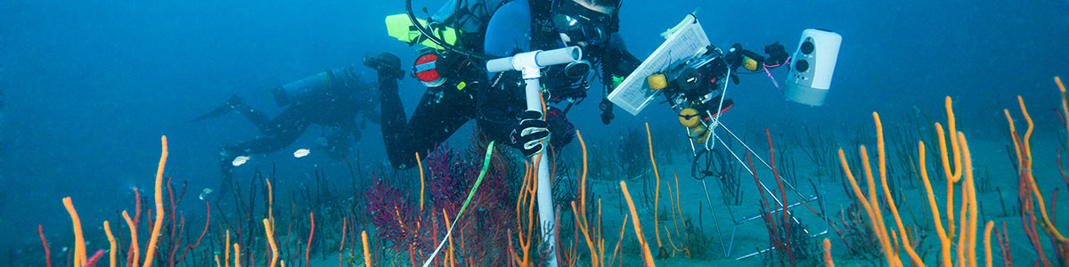 UNC-Institute-of-Marine-Science-IMS-Avery-Paxton-scuba-photo