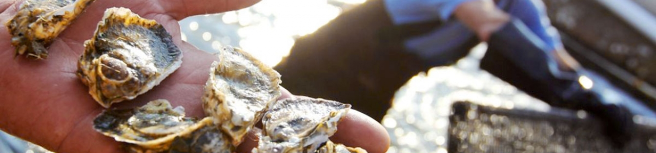 UNC-Institute-of-Marine-Science-IMS-Lindquist-Lab-oyster-research-samples-photo