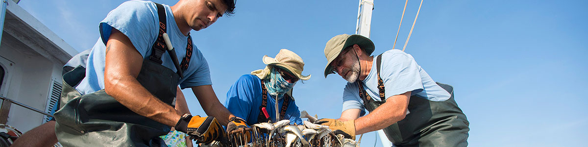 UNC-Institute-of-Marine-Science-IMS-field-work-photo