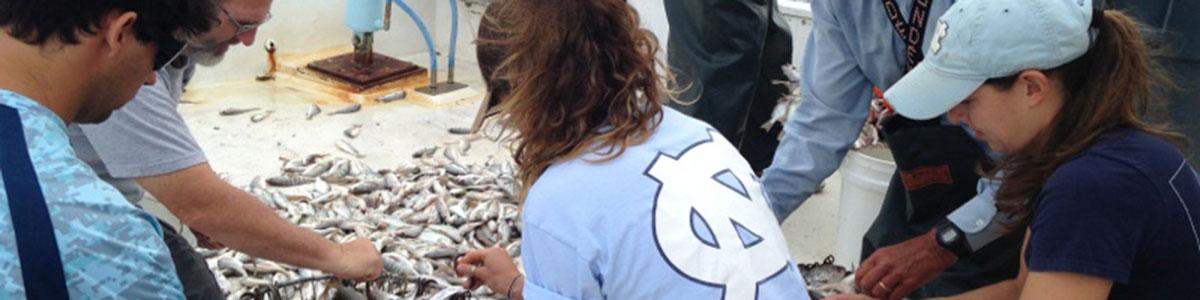 UNC-Institute-of-Marine-Science-IMS-fish-study-field-work-photo